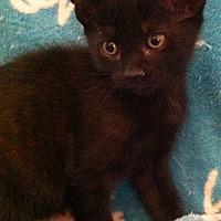 Adopt A Pet :: Khandro - Tampa, FL