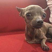 Adopt A Pet :: Chiquita! *Adoption Pending* - Los Angeles, CA