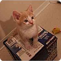Adopt A Pet :: Angel - San Jose, CA