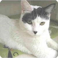 Adopt A Pet :: Bridget - Mesa, AZ