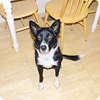 Adopt A Pet :: Rocket - Salt Lake City, UT