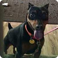 Adopt A Pet :: Ruger - Columbus, OH