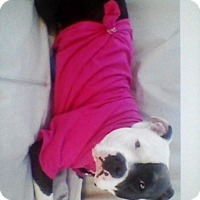 Adopt A Pet :: Melody - Rancho Cordova, CA
