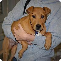 Adopt A Pet :: Lucky - Franklin, VA