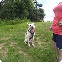Adopt A Pet :: Dillon - Arlington, TN