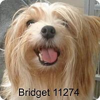 Adopt A Pet :: Bridget - Greencastle, NC