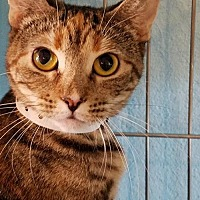 Adopt A Pet :: Amari - Phoenix, AZ