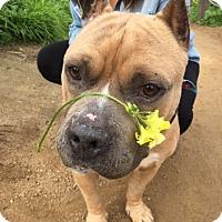 Adopt A Pet :: Dunkin - San Diego, CA