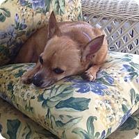 Adopt A Pet :: Todd - Overland Park, KS