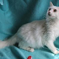 Adopt A Pet :: Handsome - Staunton, VA