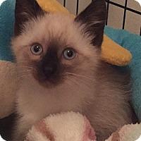 Adopt A Pet :: Cole - Cerritos, CA