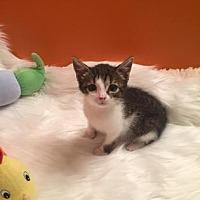 Adopt A Pet :: Misty - Santa Fe, TX