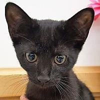 Adopt A Pet :: Tamalee - Walworth, NY