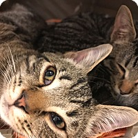 Adopt A Pet :: Dexter & Fagan - Manchester, CT
