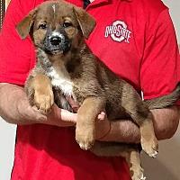 Adopt A Pet :: Trinity - South Euclid, OH