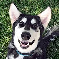Adopt A Pet :: ZIVA-Adoption Pending - Boise, ID