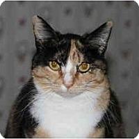 Adopt A Pet :: Miss Paint - Everett, WA