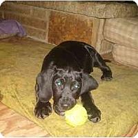 Adopt A Pet :: Paul - North Jackson, OH