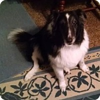Adopt A Pet :: Bert (Adopted) - Pittsburgh, PA