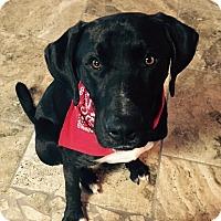 Adopt A Pet :: KINGSTON - Fort Worth, TX
