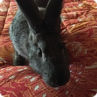 Adopt A Pet :: Jeremy - Maple Shade, NJ