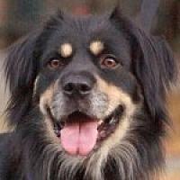 Adopt A Pet :: Tyson - Medford, MA