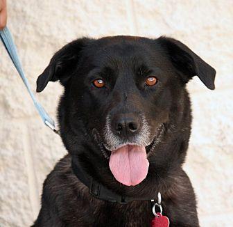 Labrador Retriever Mix Dog for adoption in Palmdale, California - Lizzie