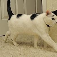 Adopt A Pet :: Chloe - Santa Monica, CA