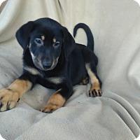 Adopt A Pet :: Kristen in CT - Manchester, CT