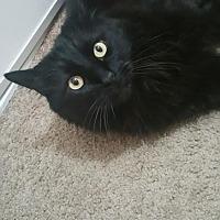 Adopt A Pet :: Rollo - Burbank, CA