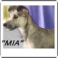 Adopt A Pet :: Mia (in adoption process) - El Cajon, CA