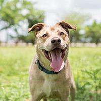 Adopt A Pet :: Roscoe - Key Biscayne, FL