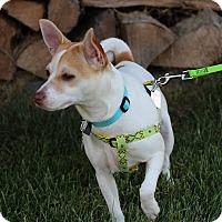 Adopt A Pet :: Nikita - Mount Gretna, PA