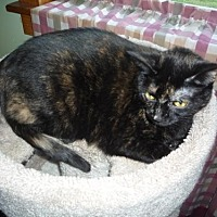 Adopt A Pet :: Faith - Whitewater, WI