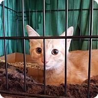 Adopt A Pet :: Sandy - Culver City, CA