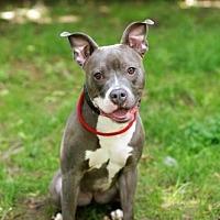 Adopt A Pet :: Luna - Armonk, NY