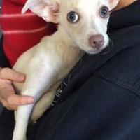 Adopt A Pet :: Dobby(Gina) - Boone, NC