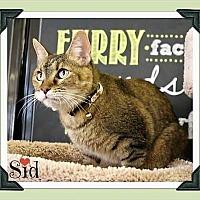 Adopt A Pet :: Sid - Arlington, TX