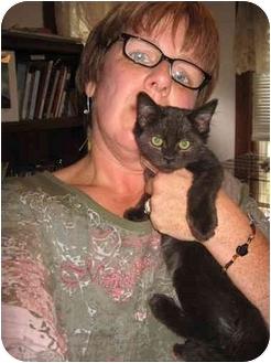 Polydactyl/Hemingway Kitten for adoption in Cincinnati, Ohio - Tennessee