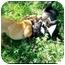 Photo 3 - American Pit Bull Terrier Mix Dog for adoption in Lawton, Oklahoma - BOLERO