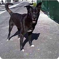 Adopt A Pet :: Slater - miami beach, FL
