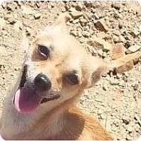Adopt A Pet :: Cindarella - Plainfield, CT