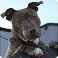 Adopt A Pet :: TIGGS - Malibu, CA