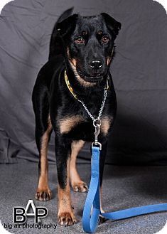 Husky/Rottweiler Mix Dog for adoption in Chilliwack, British Columbia - Prada