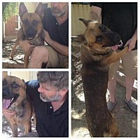 German Shepherd Dog Mix Dog for adoption in Phoenix, Arizona - Lobos