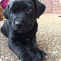 Adopt A Pet :: Barry - Bedminster, NJ