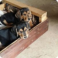 Adopt A Pet :: George and Fred - Marietta, GA