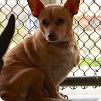 Adopt A Pet :: Reece - Erwin, TN