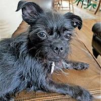 Adopt A Pet :: Gidget - Buffalo, NY