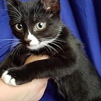 Adopt A Pet :: Meeny - Winston-Salem, NC